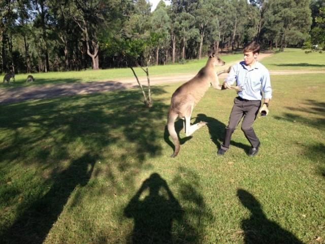 Boxing Kangaroo with Jordan Chapman