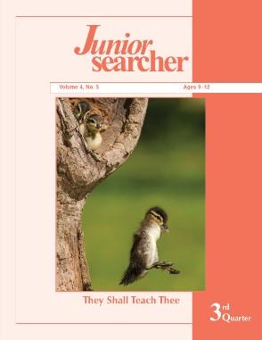 junior-searcher-vol-4_3